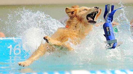 splash_dog_cressi_dog