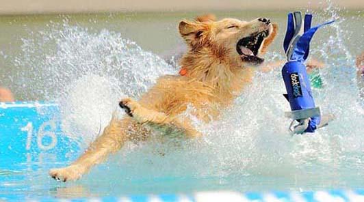 splash_dog_cressi_dog