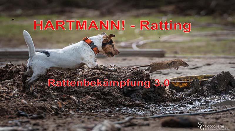 derattizzazione_Hartmann_ratting