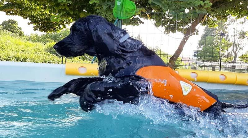 nuoto-benefici-cani-1