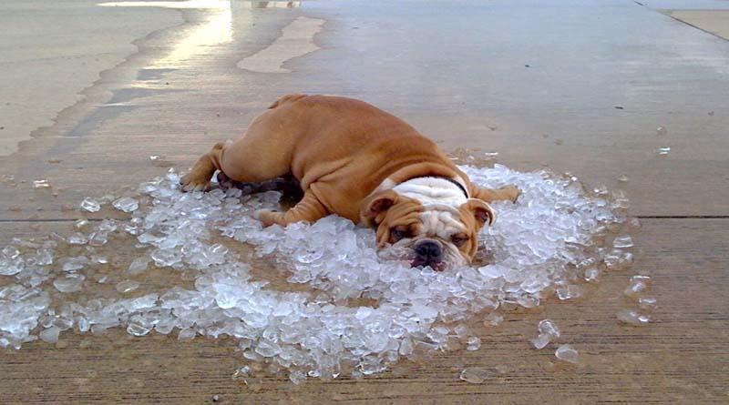 prodotti-refrigeranti-per-cani-ice-dog-cool