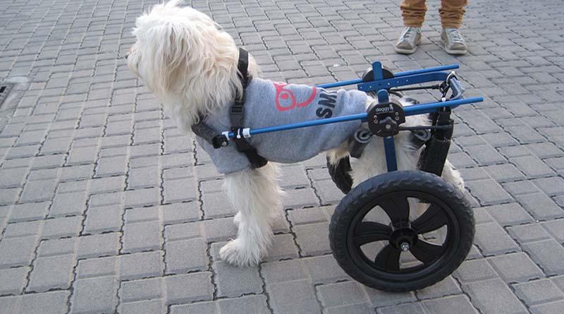 ausili ortopedici per animali