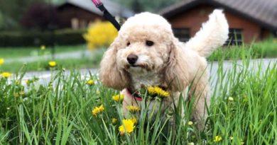 cane mangia l'erba