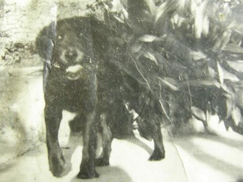 premio internazionale fedeltà del cane