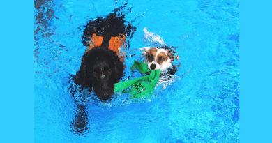 i cani possono nuotare