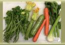quali verdure possono mangiare i cani