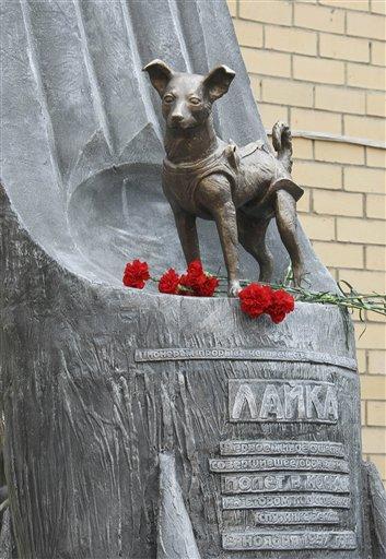 Laika il primo cane astronauta, la sua storia - il suo inutile sacrificio
