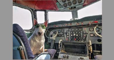 alitalia cane gatto aereo