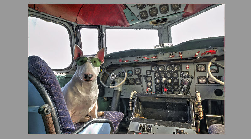 alitalia cane gatto aereo