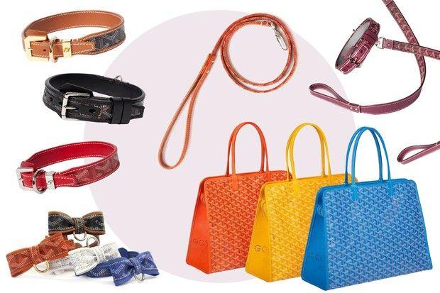 Goyard luxury dog accessori borse guinzagli collari chic du chien