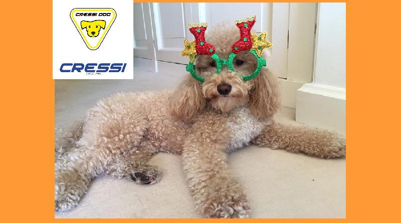 Blocao carnevale cani brasile cressi dog