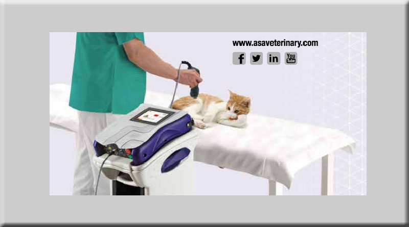 laserterapia mls ASAveterinary