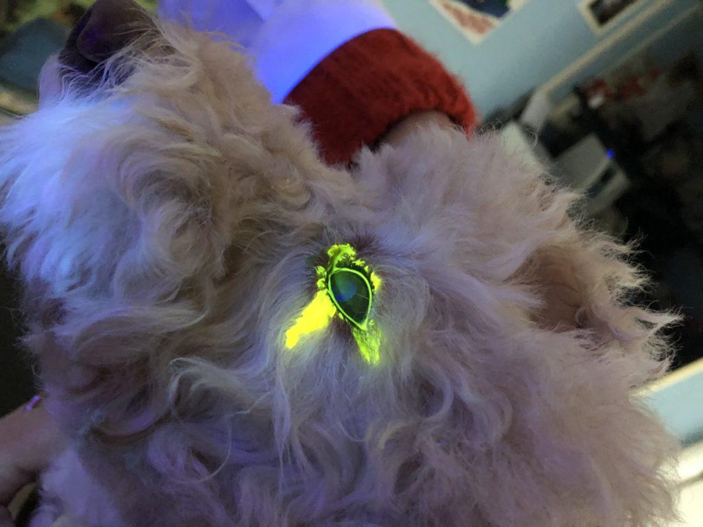 congiuntivite del cane Fluoresceina