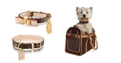 accessori lusso louis vuitton cani