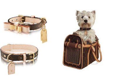 accessori lusso louis vuitton cani