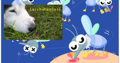 leishmaniosi pappataci