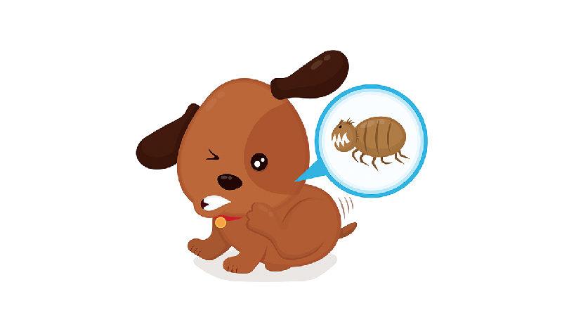 pulce antiparassitari collare antiparassitario pastiglie antiprarassitarie cane