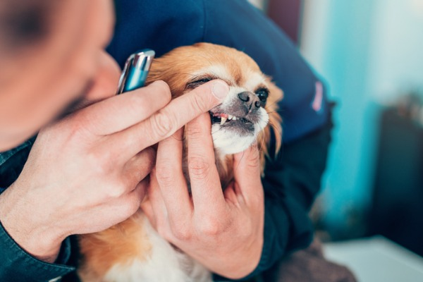 dentifricio per cani
