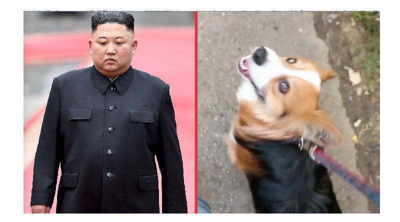 Kim Jong Un dittatore nordcoreano confisca cani