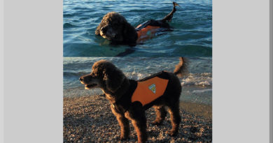 cane d'acqua cani d'acqua water dog cressi dog