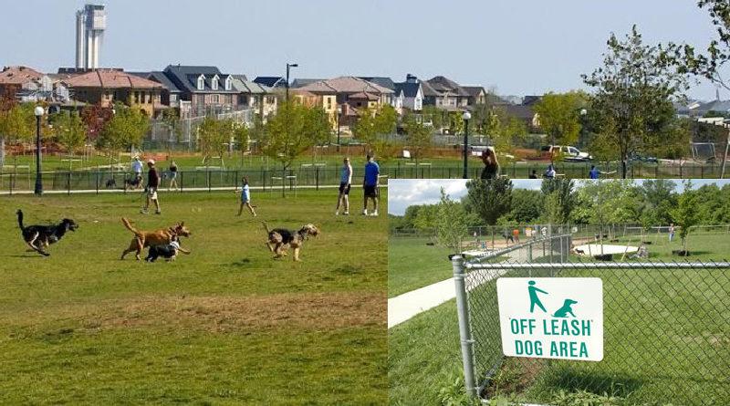 area sgambatura cani