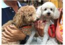 decreto Speranza farmaci umani cani gatti animali da compagnia