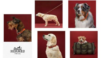 hermès linea di lusso per cani
